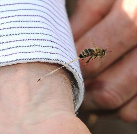 foto original picada da abelha