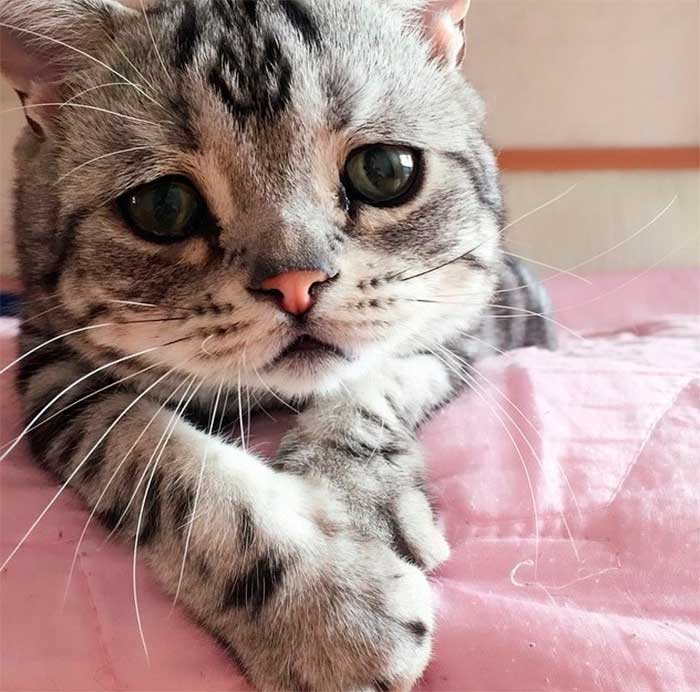 Gato mais triste do mundo - Foto